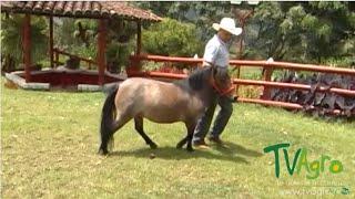 Cría de Mulas Miniatura (Ponis) - TvAgro por Juan Gonzalo Angel