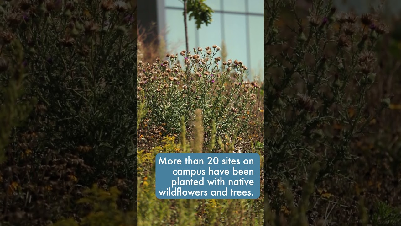 Tuesday Tour: Check out UTM's green spaces!