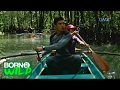 Born to Be Wild: The importance of mangrove forests to animals and humans