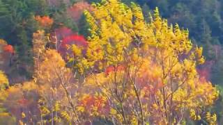 Невельская Осень