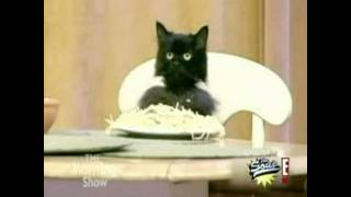 Watch Parry Gripp Spaghetti Cat video