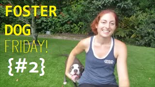 Foster Dog Friday - Episode #2 | Effective Training Saves Lives!