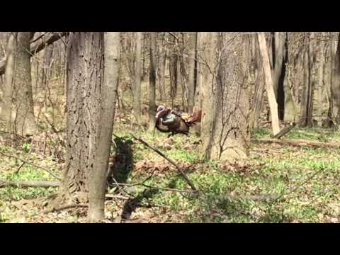 Nature Walk - North Ohio Back Woods. Finding our first Turkey