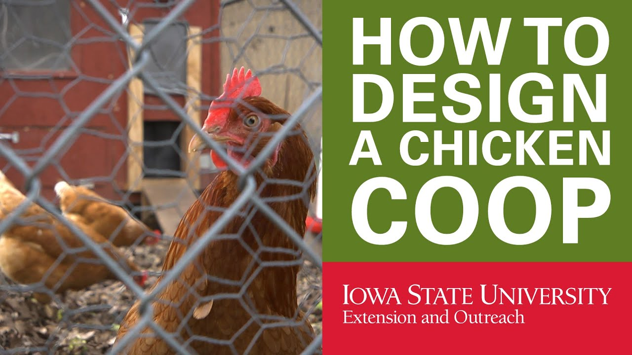 backyard chickens how to design your chicken coop youtube