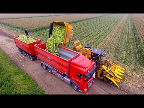 Picking Organic Sweet Corn |  Oxbo 2475 Corn Picker  | Suiker Mais Plukken