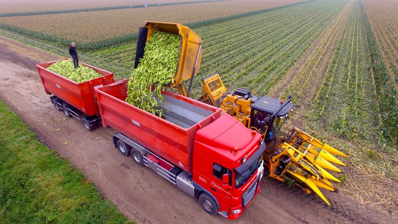 Download Picking Organic Sweet Corn    Oxbo 2475 corn picker    suiker mais plukken