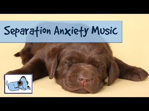 30+-minutes-of-relaxing-dog-music.-calming-sounds-to-relax-anxious-dogs---separation-anxiety-cured!
