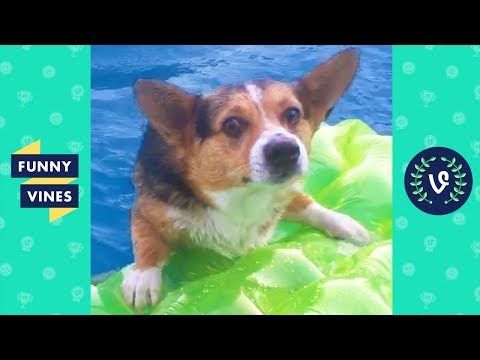 TRY NOT TO LAUGH - Cute DOG Videos | Funny Videos January 2019