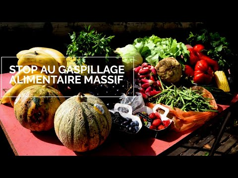 [Reportage]   Stop Au Gaspillage Alimentaire - Ep03 - YouTube