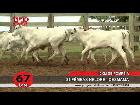 Lote 67