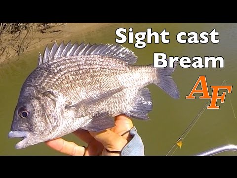Sight Casting Bream Andy's Fish Video EP.305