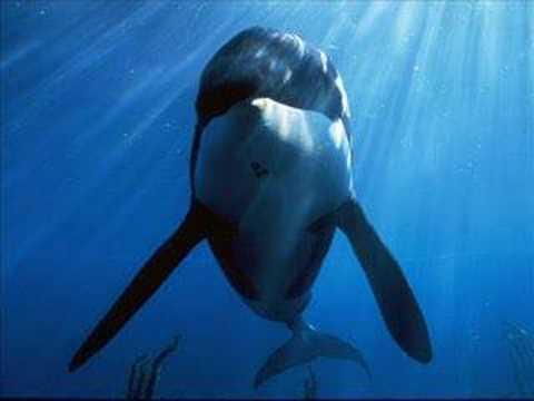 le chant des orques