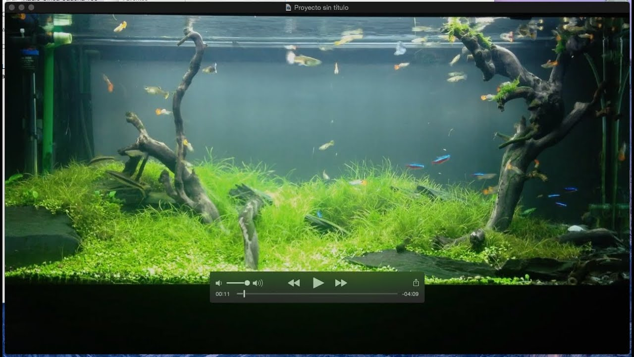 Aquascaping ADA 250 ltr. - YouTube
