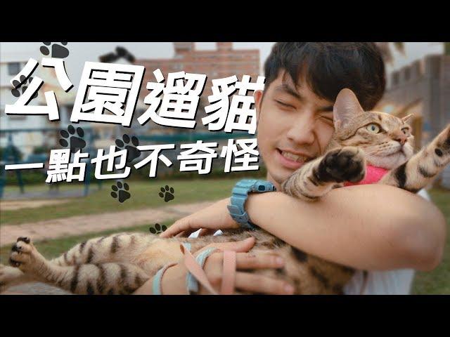 遛貓咪會很奇怪嗎?麻吉是隻愛散步的貓#麻吉日常#貓咪散步