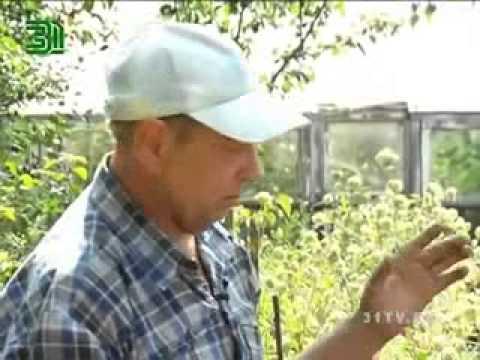 Агротехника природного земледелия. Огород без хлопот.
