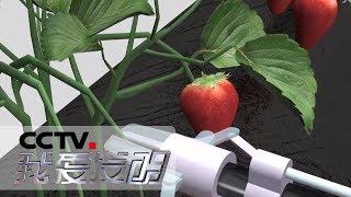 《我爱发明》 20190803 快手摘草莓| CCTV科教