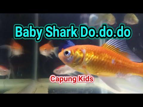 lagu-anak-baby-shark-do.do.---ikan-lucu---lagun-dan-vidio