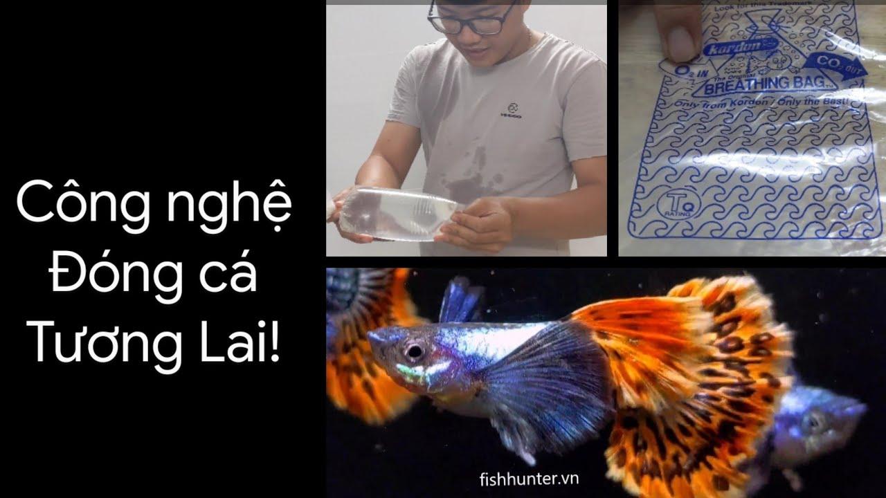 Công nghệ đóng cá tương lai, bịch cá tự hút oxy