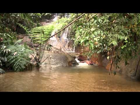 Fishing in the rainforest with Temiar aboriginal people