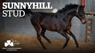 ITM Irish Stallion Showcase 2021 - Sunnyhill Stud