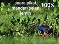 Suara Pikat Mandar Pelan Hd  Mp3 - Mp4 Download