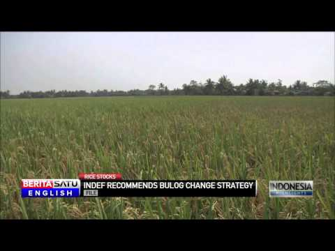 Indonesia Slammed Over Rice Import Plans After Government Declares Local Rice