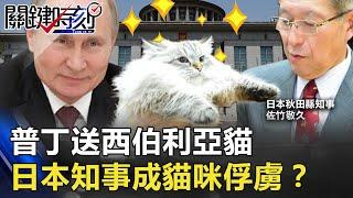 貓狗大戰變外交官!普丁送西伯利亞貓 日本知事就此成「貓咪俘虜」!?【關鍵時刻】20210115-6 劉寶傑 李正皓