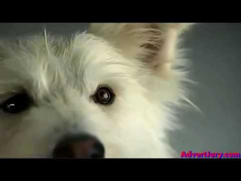 Pedigree - Slow Motion Treat Catch (Advert Jury)