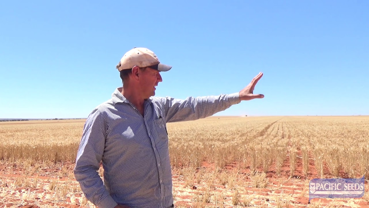 Bill Crabtree trials Pacific Seeds wheat variety Havoc