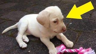 Einbrecher klauen den Hund der Familie und entdecken dabei ein Geheimnis