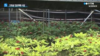 '햇빛·수분 조절' 인삼재배 시설 개발 …