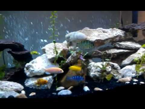budget build 75 gallon african cichlid tank  YouTube