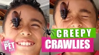 100 CRAZY Bug Videos | Cringy Insect Fails Compilation 2019
