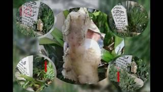 بالفيديو..حادثة غريبة جدا في مقبرة بالعاصمة دمشق