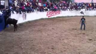 Jaripeo- la vaquilla la Reyna del sur / tlaunilolpan feria