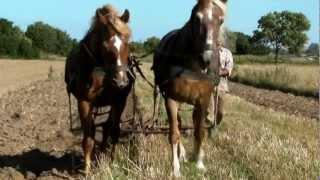 Orka  konna - Horse ploughing