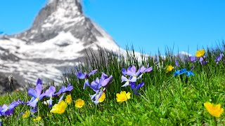 Download 10 Hours of Relaxing Music: Piano Music, Massage Music, Study Music (Helen) Mp3 and Videos