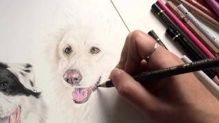 Speed Drawing: Jade The German Shepherd