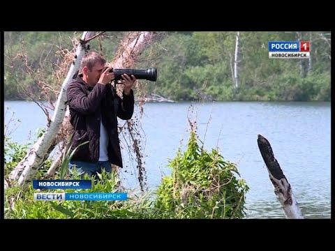 Фотографии энтузиаста пополнили Красную книгу Новосибирской области