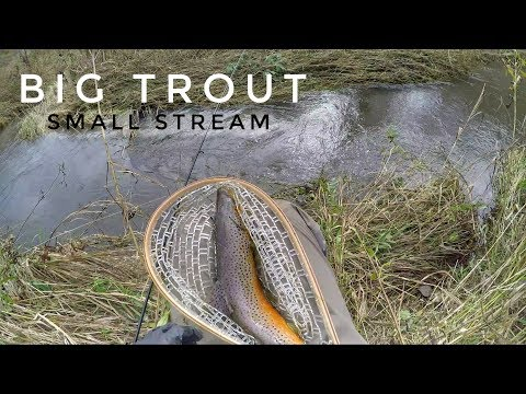 Big Brown Trout In The Fall - Driftless Trout Fishing