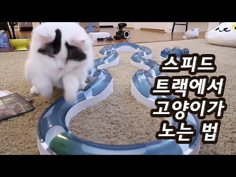 고양이 스피드 트랙으로 노는 법 - 똑똑 쵸비 순둥 꼬부기 Cat with Speed Circuit