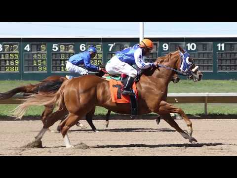 Colorado's Fastest Horses: Quarter Horses at Arapahoe Park