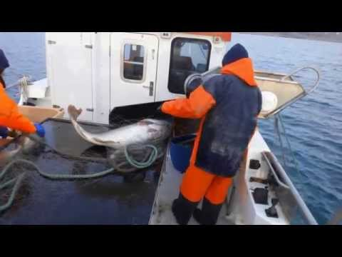 Fishing On Icelandic Sea Water.....