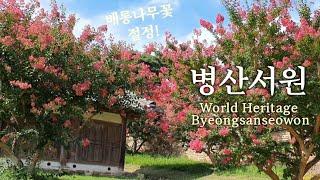 세계문화유산 병산서원 배롱나무꽃으로 물들다! World…