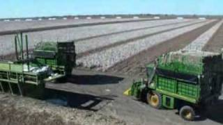 Cotton Picking - Mungindi, NSW, Australia - April 2010