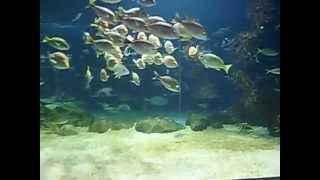サンピアザ水族館.
