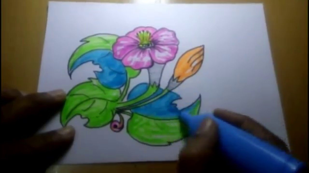Free Hand Sketch WIth Colour - Flowers - YouTube