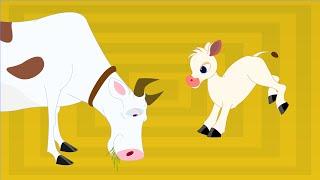 Thotathil Meyudhu ( Cow Song) | Chellame Chellam |  Tamil Rhymes