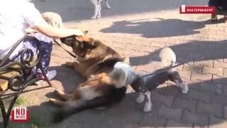 В детский онкоцентр привели собак
