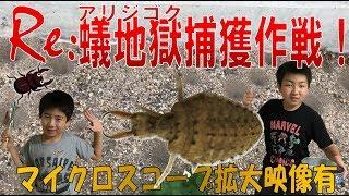 昆虫採集☆カブトムシ☆クワガタムシ Reアリジゴク捕獲作戦】(くろねこチ...